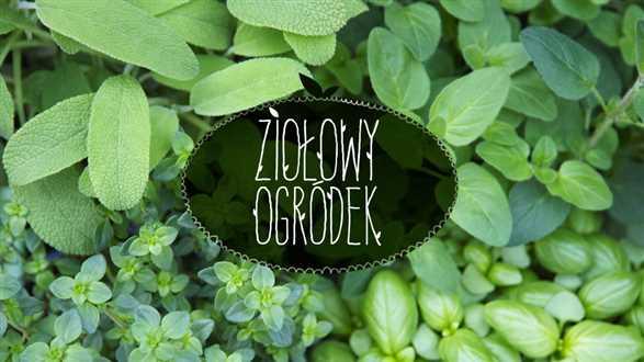Jak uprawiać zioła w domu?