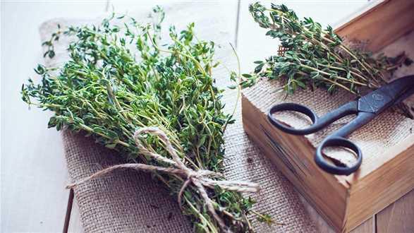 Jak kroić zioła?